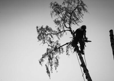 Bilde av mann som feller et tre - Trefelling, Asker, Bærum - We Fix AS